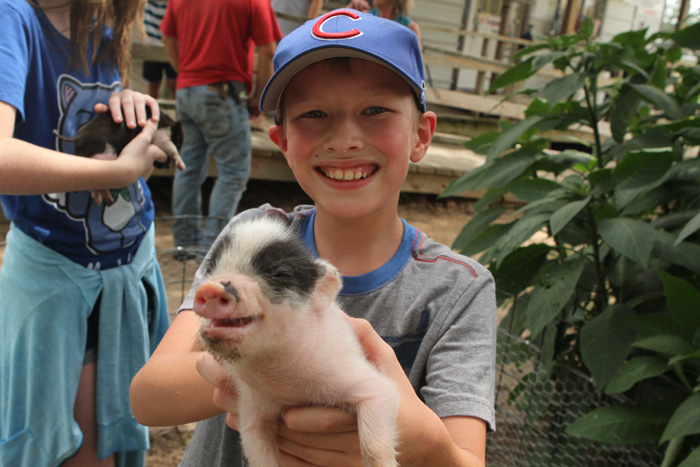 Gavin and The Piglet