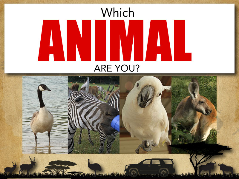 Quiz – What Animal Are You ?